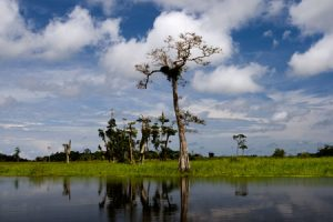 Loango National Park