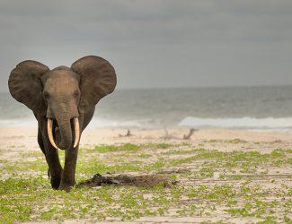 Gabon-main-pic