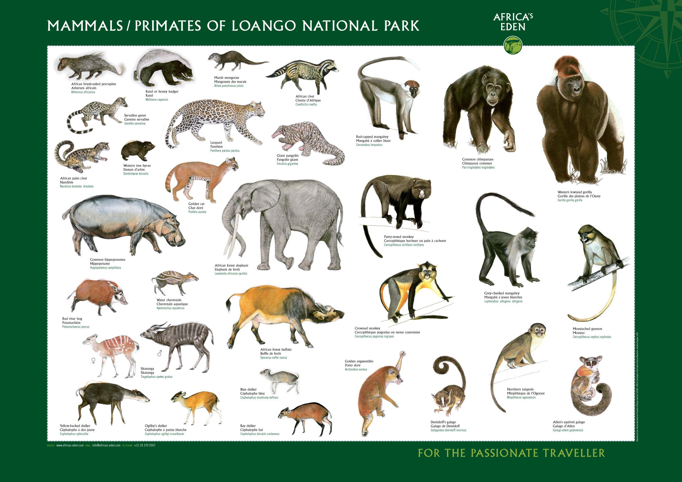 mammals and primates